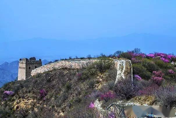 """这片被遗忘的山谷已经美出天际!人少景美,被誉为北京长城边的""""杏花谷""""花海!"""